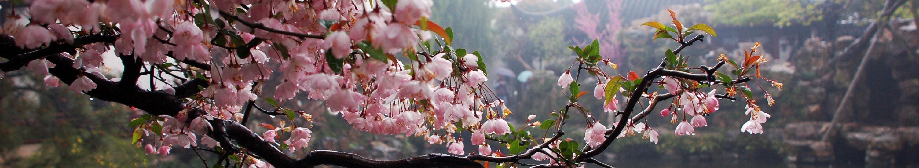 Чудеса южного Китая <br> Гонконг — Макао — Гуанчжоу — Гуйлинь — Яншо — Шэньчжэнь — Гонконг