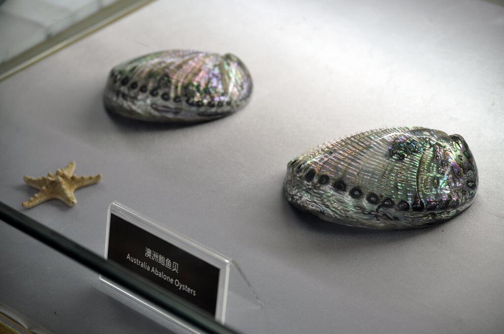 Плантация и музей жемчуга на Хайнань - фото