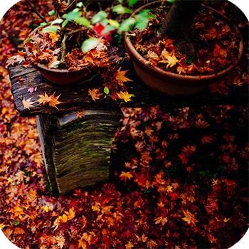 осень в Арасияме клены момидзы фото 3