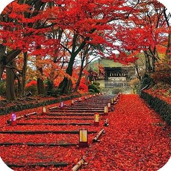 Клены Момидзи в Киото фото 6