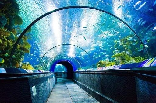 океанариум - достопримечательности шанхая фото