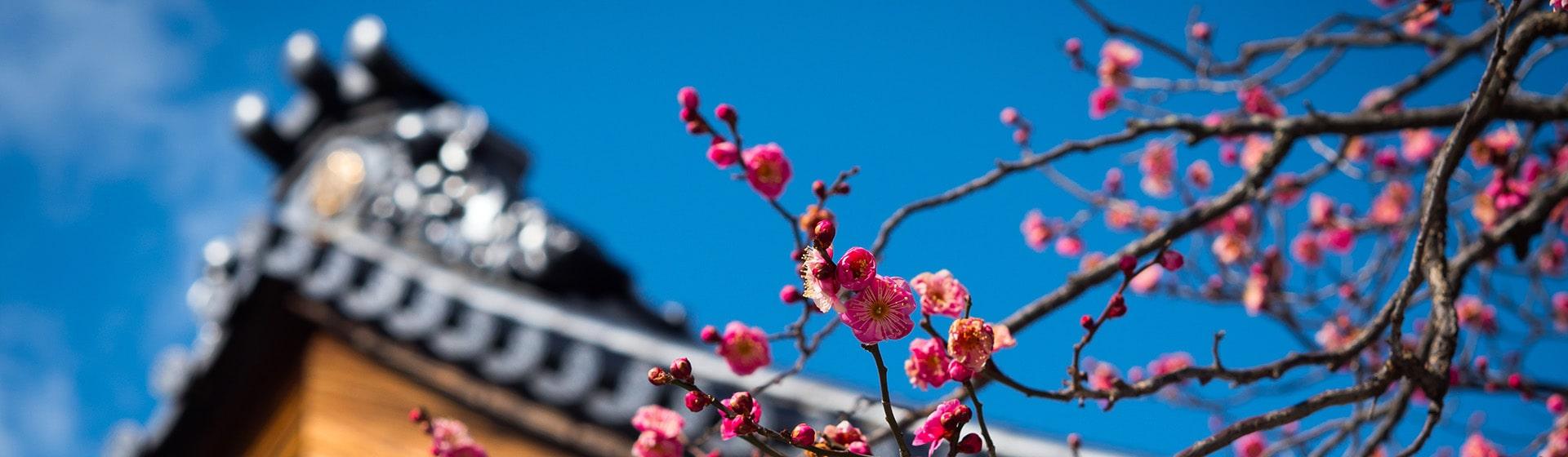 Легенды и огни Токио на 8 марта. Сезон цветения сливы<br>Токио — Йокогама — Токио