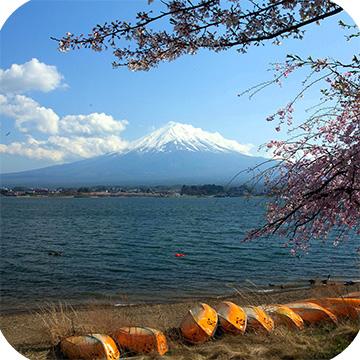 тур на сакуру в Японии фото 4