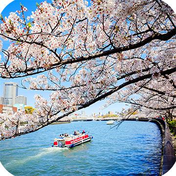 Групповые туры на цветение сакуры в Японии фото 10